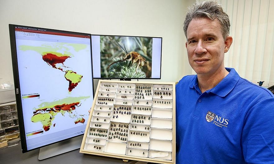 Assistant Professor John Ascher of the National University of Singapore's department of biological sciences is the main data provider for the bee map. PHOTO: LIANHE ZAOBAO
