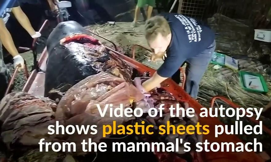 Whale found dead with 40kg of plastic in its stomach