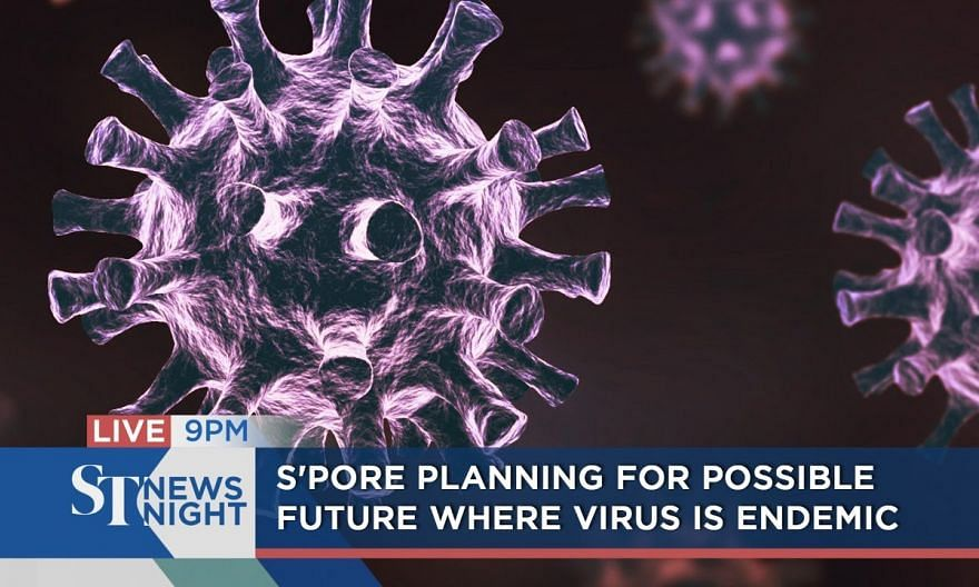 S'pore planning for possible future where virus is endemic | ST NEWS NIGHT