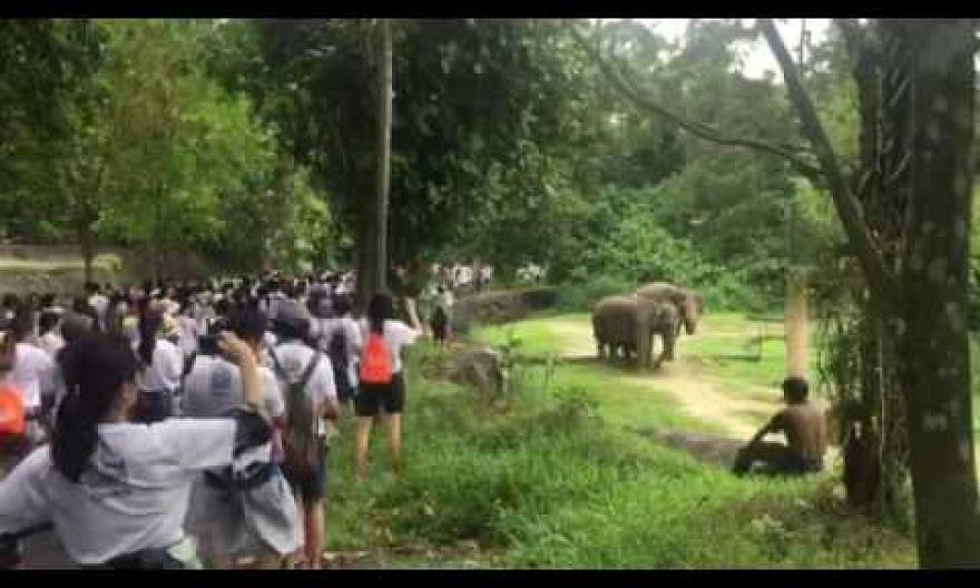 TNP Big Walk participants walk past the elephant enclosure in the Night Safari