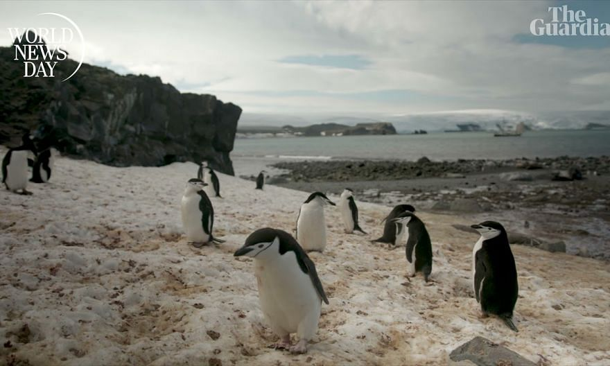 WND Penguins Teaser featuring The Guardian