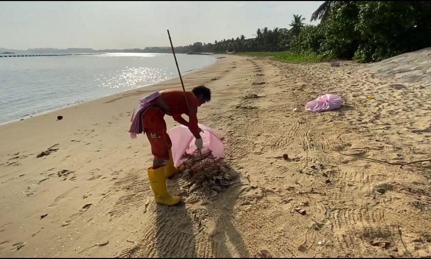 Dead fish along the beach at Pasir Ris Park