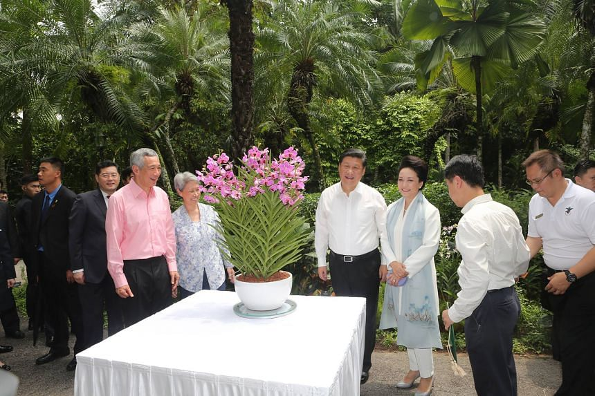 Chinese president Xi Jinping (fourth from right) and his wife Peng Liyuan at an orchid-naming ceremony at the Botanic Gardens with Prime Minister Lee Hsien Loong and his wife Ho Ching on Nov 7.