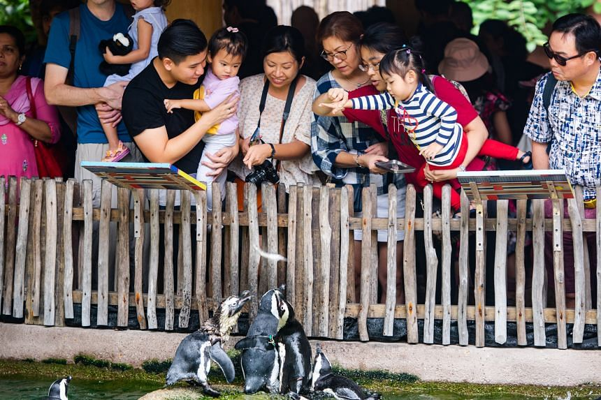 This season, Jurong Bird Park features many opportunities to get up close and personal with friendly penguins. PHOTO: WILDLIFE RESERVES SINGAPORE