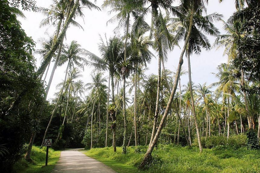 """Dr Mohamad Maliki Osman would prefer not to turn Pulau Ubin into a tourist attraction. """"I don't like to see it as a tourist destination, but as a destination for Singaporeans to experience what rustic life is about,"""" he says. -- PHOTO: BERITA H"""