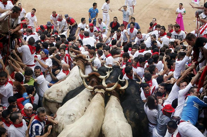 Runners get trapped with Fuente Ymbro fighting bulls and steer in a stampede at the entrance to the bull ring during the seventh running of the bulls of the San Fermin festival in Pamplona on Saturday, July 13, 2013.Dozens of people were trampl
