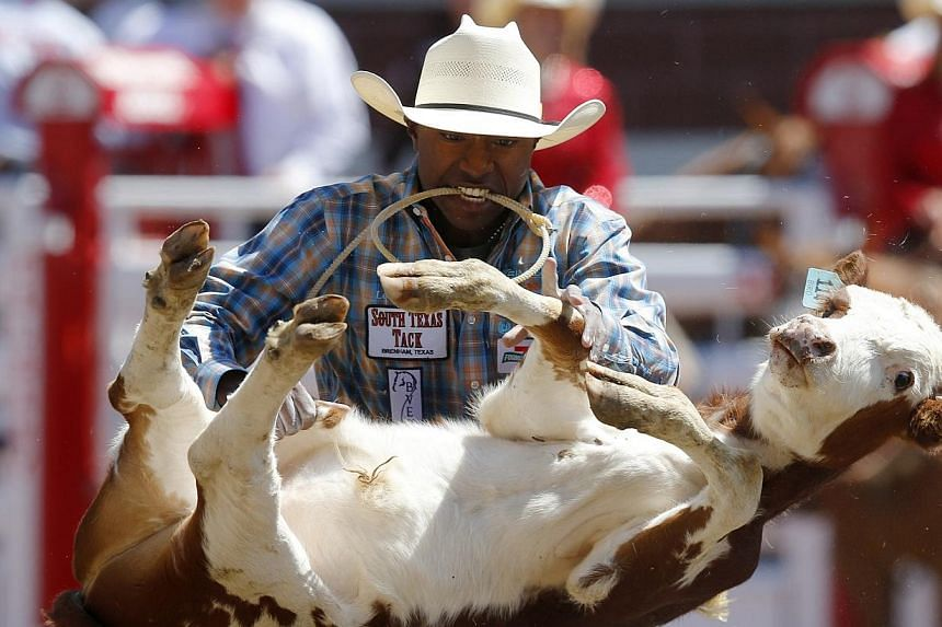 Cory Solomon of Prairie View, Texas flips a calf in the tie-down roping event during the finals of the 101st Calgary Stampede rodeo in Calgary, Alberta on July 14, 2013. See more pictures from around the world in Through The Lens' Today in Pictures.