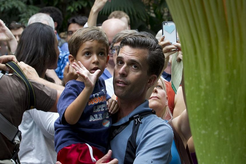 The Capitol dome looms in the background as Ty Heaton, of Falls Church, Virginia, holding his four-month-old baby Brae, (centre), and others, wait to enter the US Botanic Garden in Washington, on Monday, July 22, 2013, to view the Titan arum, also kn