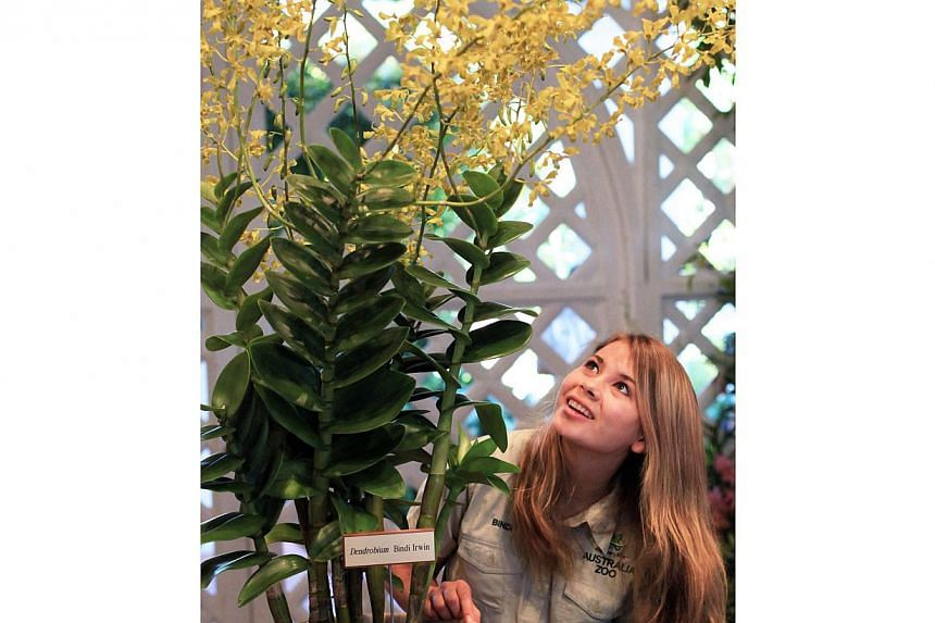 Young conservationist Bindi Irwin, daughter of Steve Irwin, had an orchid named after her when she was in Singapore recently. -- ZAOBAO FILE PHOTO