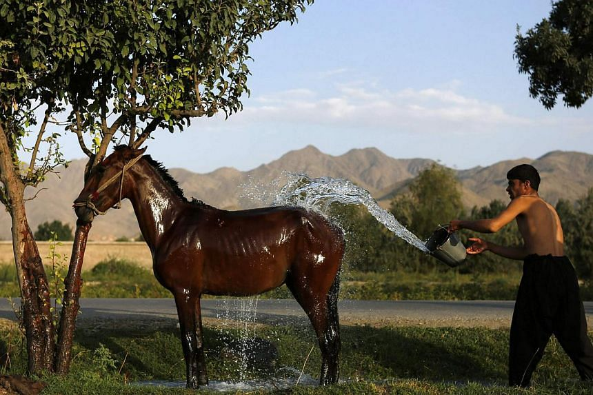 An Afghan man washes his horse in Kabul on Aug 4, 2013. -- FILE PHOTO: REUTERS