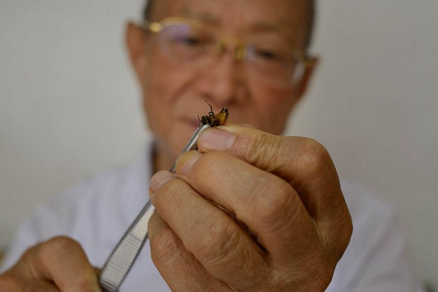 Doctor of traditional Chinese medicine Wang Menglin uses tweezers to hold a bee at his clinic on the outskirts of Beijing on Aug 2, 2013. Patients in China are swarming to acupuncture clinics to be given bee stings to treat or ward off life-threateni