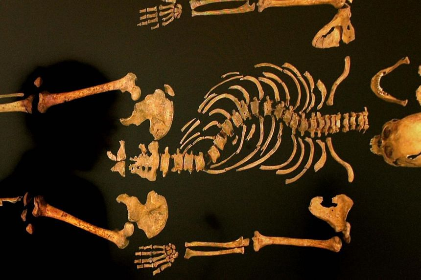 This April 2, 2013, file photo shows a view of the skeleton of England's King Richard III. The British public should be consulted on the final resting place of Richard III, the 15th-century king whose skeleton was found under a carpark, a judge ruled