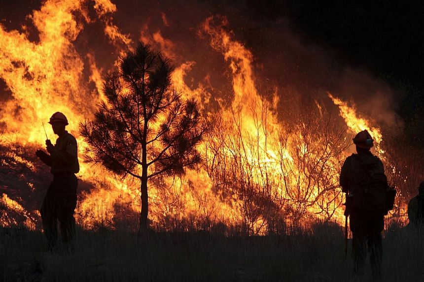 Firefighters start a back burn along the Pine-Featherville Road while battling the more than 90,000-acre Elk Complex Fire near Pine on Monday Aug 12, 2013. Firefighters mounted on Sunday an all-out ground and air attack on an Idaho wildfire that has