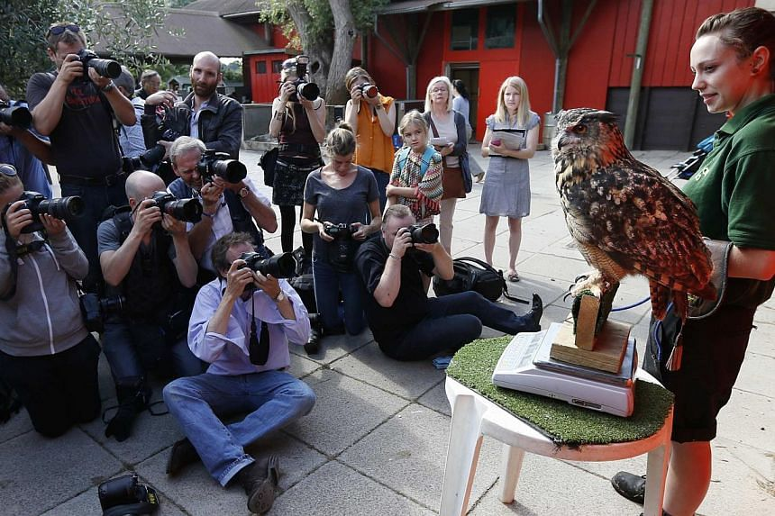 Photographers take pictures of Max, an eurasian eagle-owl, as it perches on a scale next to keeper Helen Crooks during a photocall to publicise the annual measuring of all the animals at the London Zoo, in central London on Wednesday, Aug 21, 2013. -