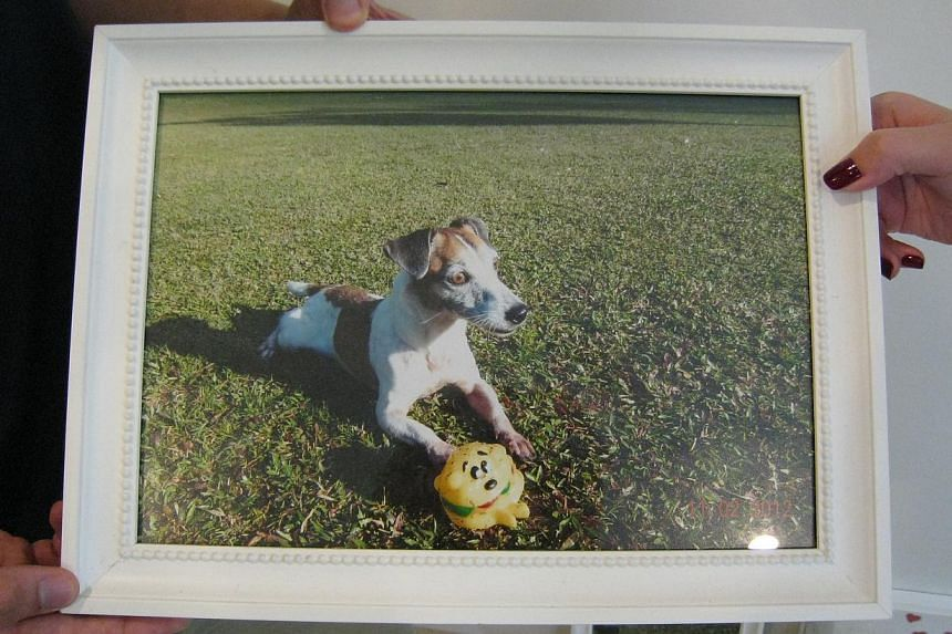Tiger, a jack russell terrier, died on July 22 after playing at Block 412, Commonwealth Avenue West. The town council has warned the firm involved.
