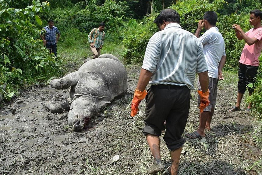 Indian forest officials stand near the body of a one horned horn rhinoceros, which was killed and de-horned by poachers at Burapahar in Kaziranga National Park, some 250km east of Guwahati on Wednesday, Aug 21, 2013. An armed gang has killed two