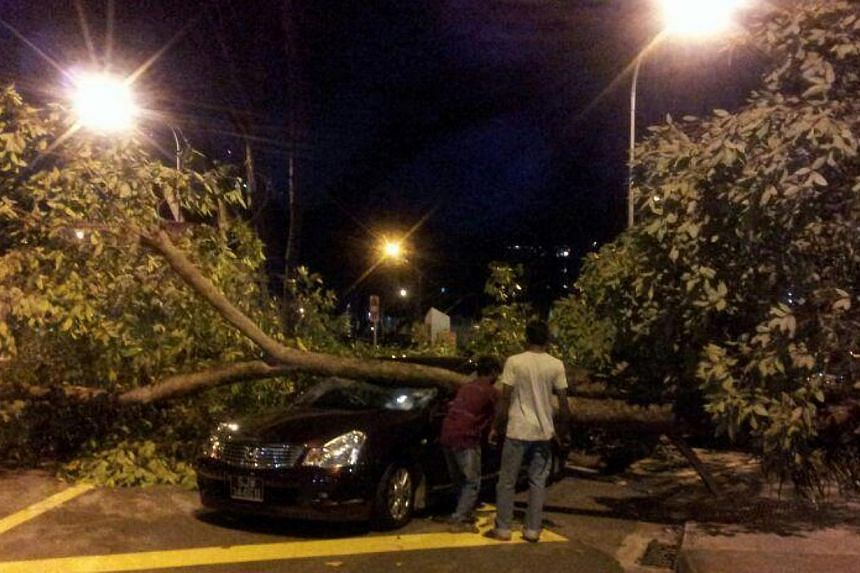 A tree fell on a taxi and a car at Commonwealth Crescent on Thursday night. Two men were injured. -- ST PHOTO: RACHEL AU-YONG
