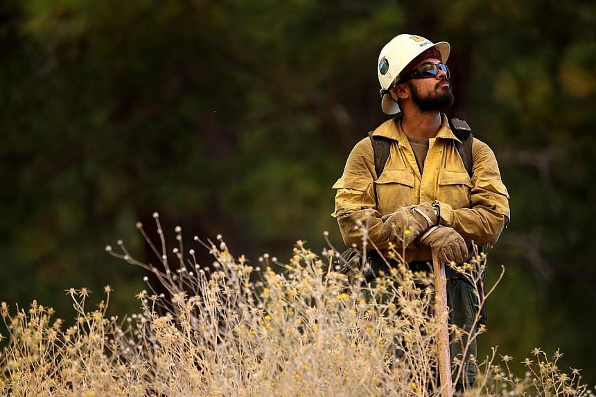 A US Forest Service firefighter monitors the Rim Fire as it approaches Yosemite Lakes on Aug 23, 2013 near Groveland, California. -- PHOTO: AFP