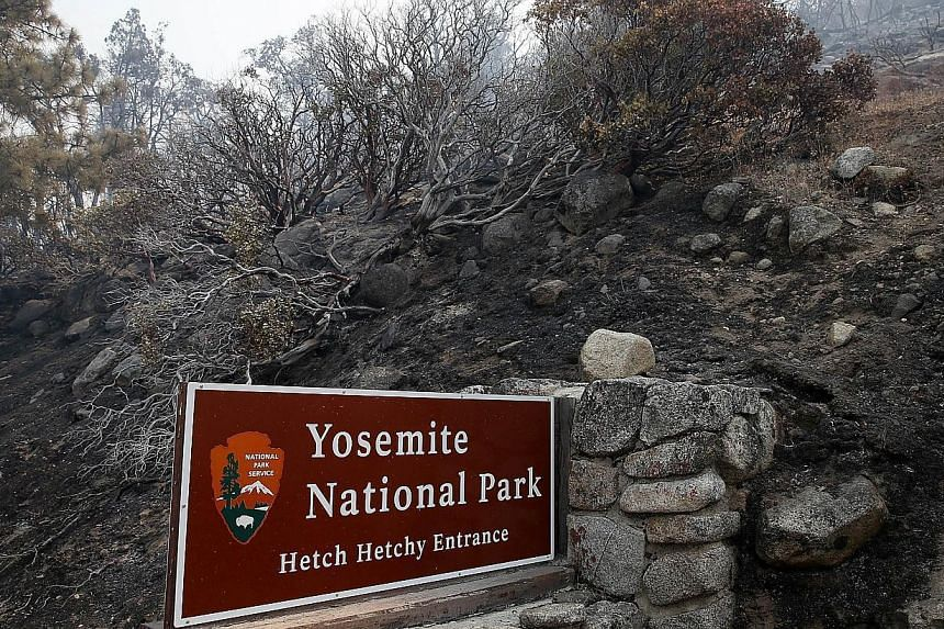 Charred brush sits next to the Hetch Hetchy entrance to Yosemite National Park after the Rim Fire burned through on Aug 23, 2013 in Yosemite National Park, California. -- PHOTO: AFP