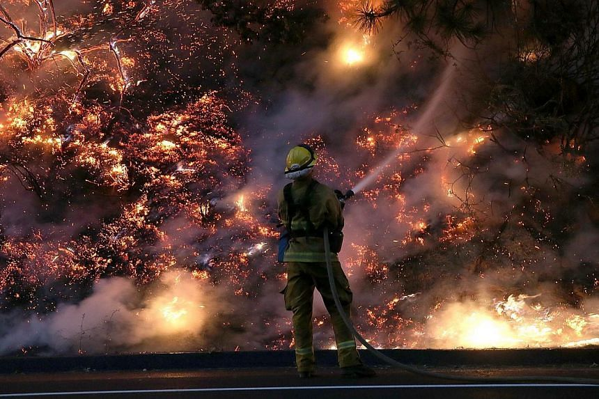 A firefighter uses a hose to douse the flames of the Rim Fire on Aug 24, 2013 near Groveland, California. The Rim Fire continues to burn out of control and threatens 4,500 homes outside of Yosemite National Park. -- FILE PHOTO: AFP