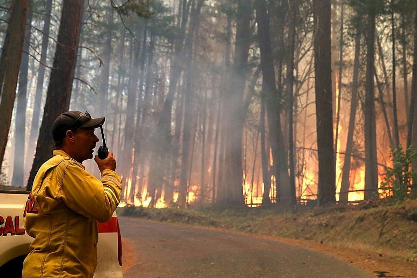 A Cal Fire firefighter monitors the Rim Fire as it burns through a grove of trees on Aug 25, 2013 near Groveland, California. The Rim Fire continues to burn out of control and threatens 4,500 homes outside of Yosemite National Park. Over 2,000 firefi