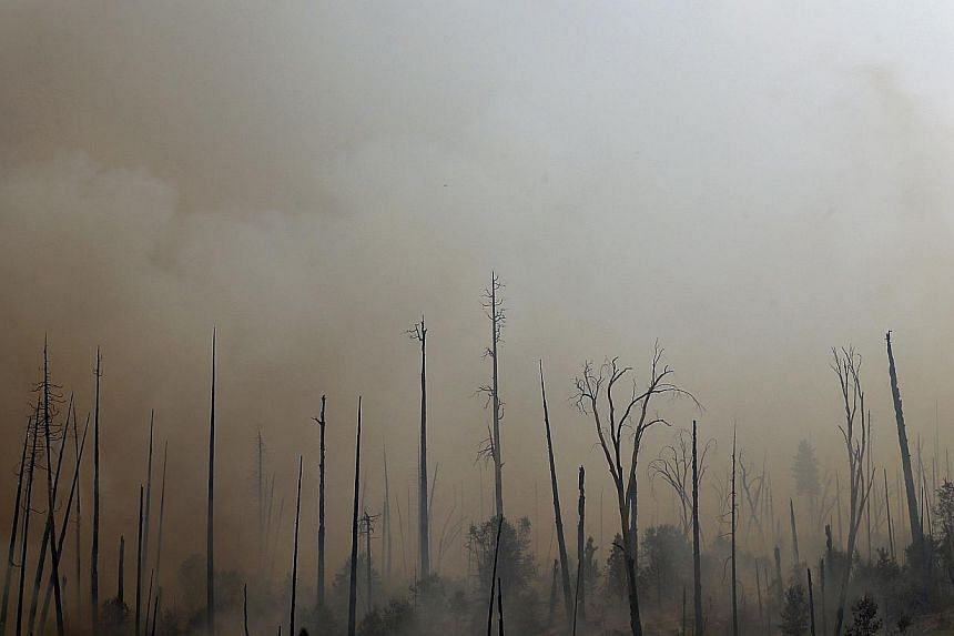 Trees burned by the Rim Fire stand on Aug 25, 2013 in Yosemite National Park, California. The Rim Fire continues to burn out of control and threatens 4,500 homes outside of Yosemite National Park. Over 2,000 firefighters are battling the blaze that h