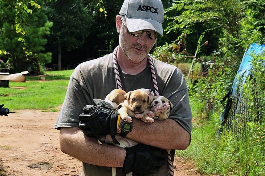 Puppies are carried by an official at a home in Auburn, Alabama, in this Aug 23, 2013, photo provided by the American Society for the Prevention of Cruelty to Animals (ASPCA).Some 367 pit bulls, many scarred and emaciated, have been rescued and