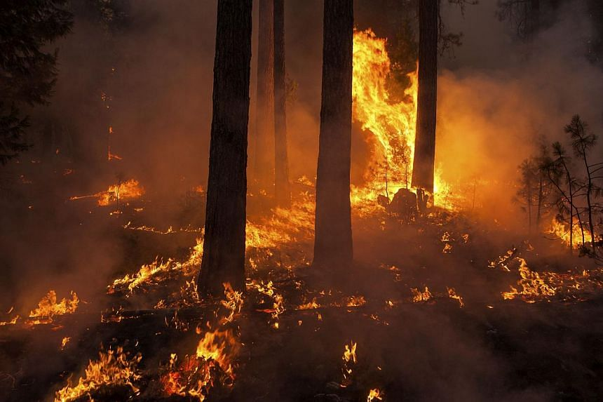 The Rim Fire burns near Camp Mather, California, on Aug 26, 2013. The wildfire threatening Yosemite National Park grew on Tuesday to become the seventh biggest ever in California. -- FILE PHOTO: REUTERS
