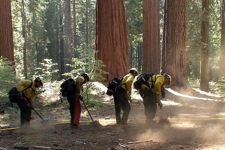 Sprinkler lines are set around the perimeter of a grove of giant sequoias in Yosemite National Park in this photo made on Sunday, Aug 25, 2013, and released by the National Park Service on Aug 27. The wildfire threatening Yosemite National Park grew