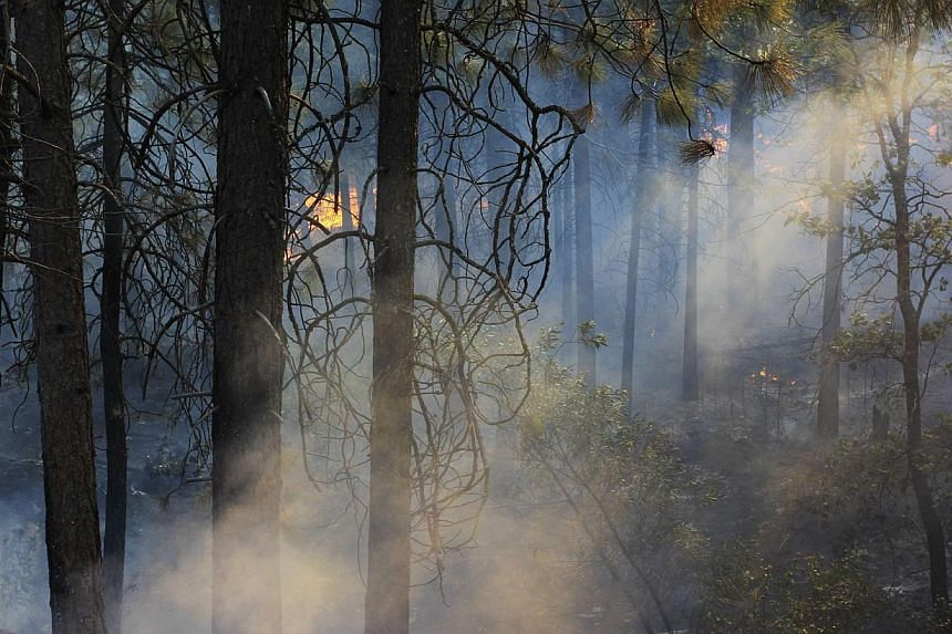 The late afternoon sun shines through smoke as fire creeps through the forest at the Rim Fire just outside of Yosemite National Park, California, on Aug 27, 2013. Smoke from the huge wildfire in Yosemite National Park reached the heavily-touristed he
