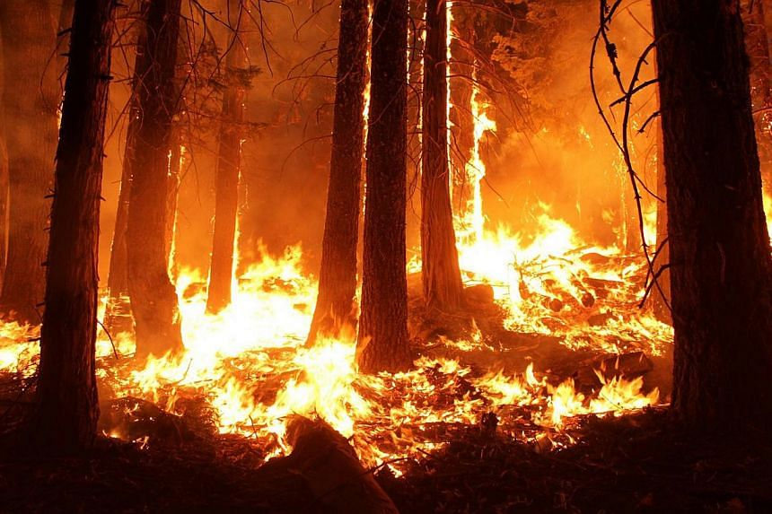 The Rim Fire burns at night in this undated United States Forest Service handout photo near Yosemite National Park, California, released to Reuters on Aug 30, 2013. Fire crews battling to outflank a monster wildfire inside Yosemite National Park made