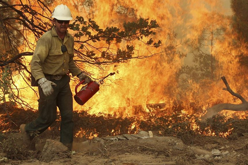 This Friday, Aug 30, 2013 image provided by the US Forest Service shows a member of the BLM Silver State Hotshot crew using a drip torch to set back fires on the southern flank of the Rim Fire in California. -- FILE PHOTO: AP