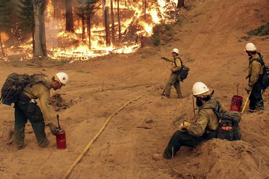 In this Friday, Aug 30, 2013 image provided by the US Forest Service, members of the BLM Silver State Hotshot crew perform burn operations on the southern flank of the Rim Fire in California. -- FILE PHOTO: AP