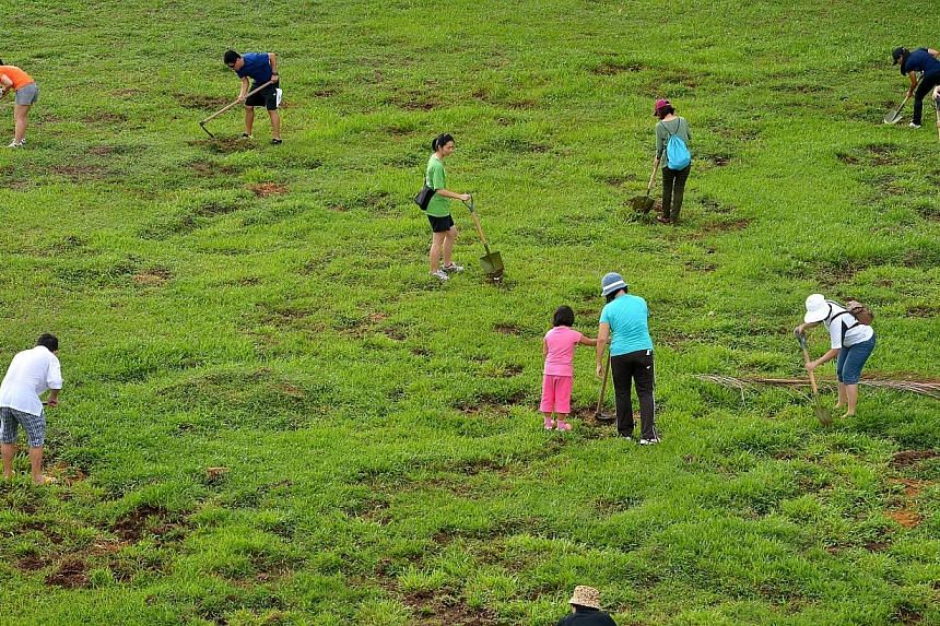 Nearly 50 residents from the Kebun Baru area came together on Sunday morning for the first time to help restore grass patches in Lower Pierce Park damaged by wild boars. -- ST PHOTO:KUA CHEE SIONG