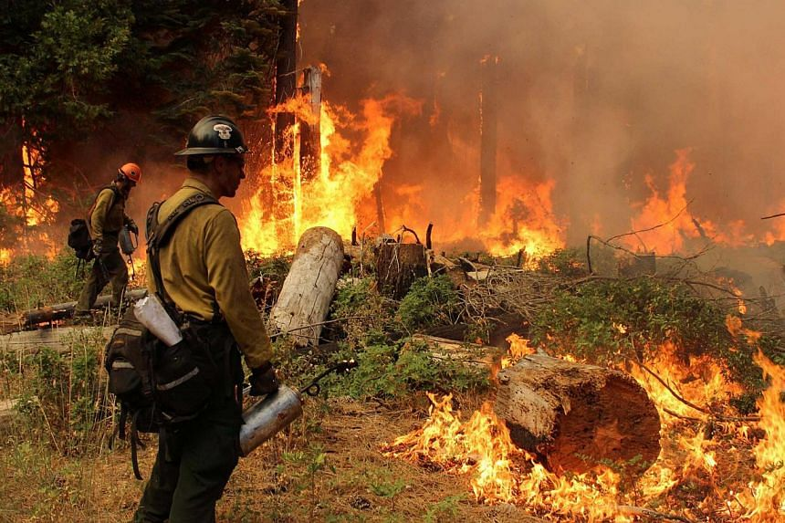 Firefighters burn a fire break at the Rim Fire in Yosemite National Park in this Sept 1, 2013 handout photo. Firefighters in California gained ground the massive wildfire burning part of Yosemite National Park, although complete containment may be we