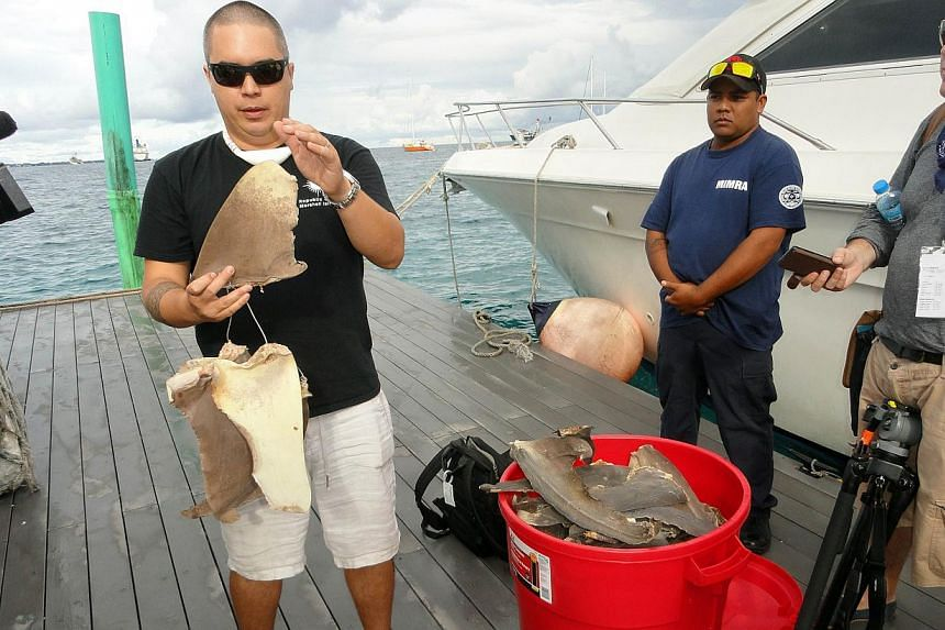 Pew Charitable Trusts shark expert Angelo Villagomez (left) explains about the types of shark fins that were confiscated by Marshall Islands fisheries enforcement officials earlier this year during a ceremony in Majuro on Sept 3, 2013. The Marshall I