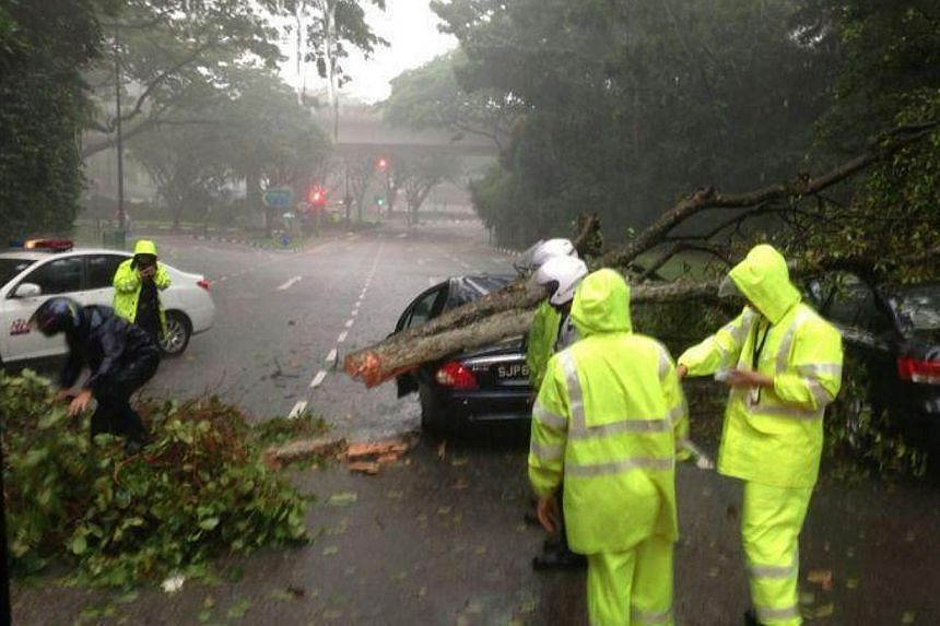 A large tree fell on two cars along Dunearn Road early Thursday morning, causing a massive jam along a stretch on Bukit Timah Road. -- PHOTO: READER CUI TINGWEI