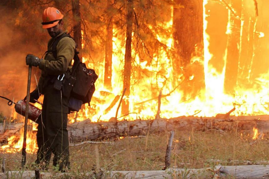 In this photo provided by the US Forest Service, fire crew members stand watch near a controlled burn operation as they fight the Rim Fire near Yosemite National Park in California on Monday, Sept 2, 2013. A monster blaze that has blackened an area l