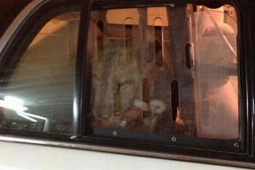 A passer-by lured a runaway lion roaming an upmarket suburb of Kuwait into his car and then called the police for help, an incident that raised concerns about wild animals kept as pets in the wealthy Gulf Arab state.Pictures in Kuwaiti media sh