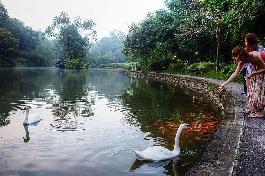 Visitors feeding the fishes as a pair of mute swans swim by at the Swan Lake in the Singapore Botanic Gardens on Mar 31, 2013. The National Heritage Board and the National Parks Board are seeking public feedback ahead of their bid to make 154-year-ol