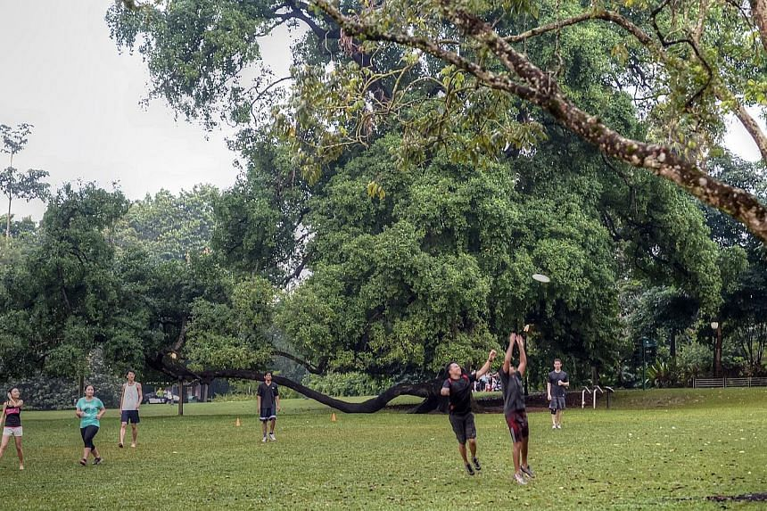 A group of people playing at the Singapore Botanic Gardens.The National Heritage Board and the National Parks Board are seeking public feedback ahead of their bid to make 154-year-old Singapore Botanic Gardens a Unesco World Heritage Site.&nbsp