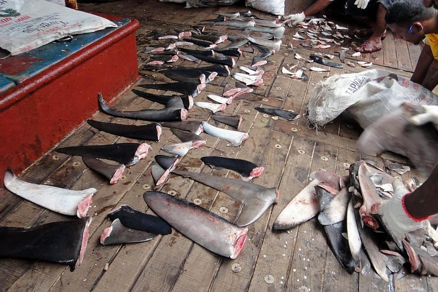 """Shark's fins confiscated by Marshall Islands law enforcement personnel on Dec 1, 2011.Hong Kong's government said on Friday, Sept 13, 2013, it would stop serving shark's fin at official functions as """"a good example"""", following years of lobbying"""