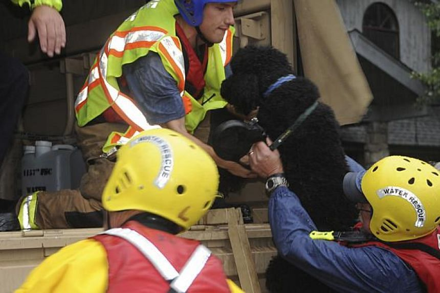 Colorado National Guardsmen rescue a dog while responding to floods in Boulder County, Colorado, in this handout photo provided by the Army National Guard and taken on Sept 12, 2013. The National Guard on Friday evacuated a Colorado town cut off by r