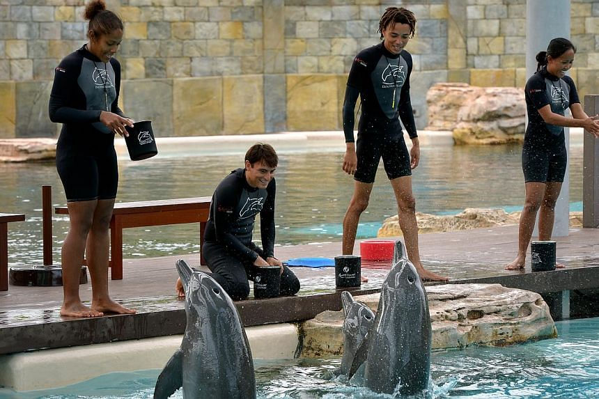 Trainers interacting with the dolphins at Resorts World Sentosa. The trainers are taught to look out for problem signs in the dolphins' behaviour or body language. -- ST PHOTOS: KUA CHEE SIONG