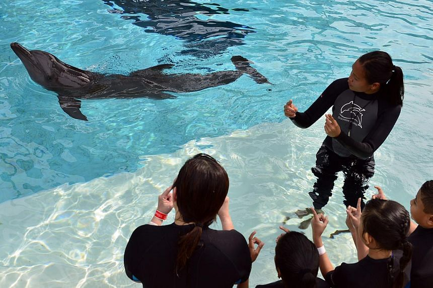 Marine mammal trainer Eliza Lee teaching kids from The Little Arts Academy how to interact with dolphins on Sept 18, 2013. -- ST PHOTO: DESMOND FOO