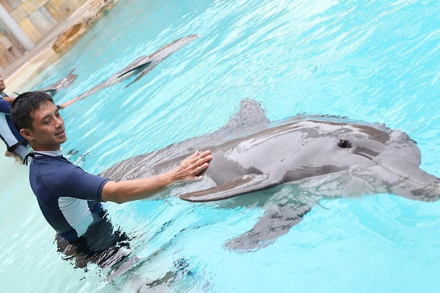 A marine mammal specialist interacting with a bottlenose dolphin at the Marine Life Park in Resorts World Sentosa (RWS).-- FILE PHOTO:RESORTS WORLD SENTOSA