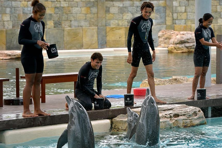 Trainers interacting with dolphins at Resorts World Sentosaa's Marine Life Park on Sept 13, 2013. -- ST PHOTO:KUA CHEE SIONG