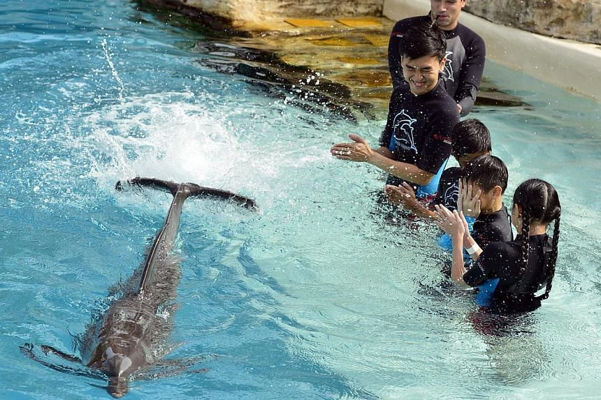 During an interactive session, Shi Yi the dolphin gets to show off its playfulness by splashing on (from top) marine mammal trainer Andrew Baptise, 28, Little Arts Academy staff Jason Ang, 25 ,Khathiravan s/o Kumaran,10, Jayson Ang, 9 and Zandley Teo