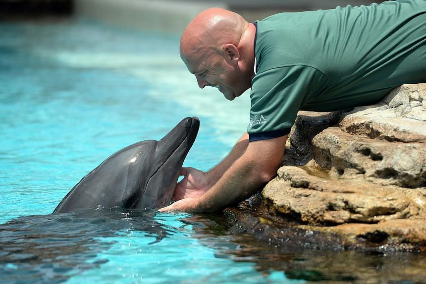 Andrew Schleis, assistant director of marine mammal operations at Marine Life Park, Resorts World Sentosa, playing with one of the dolphins. -- ST FILE PHOTO: JOYCE FANG