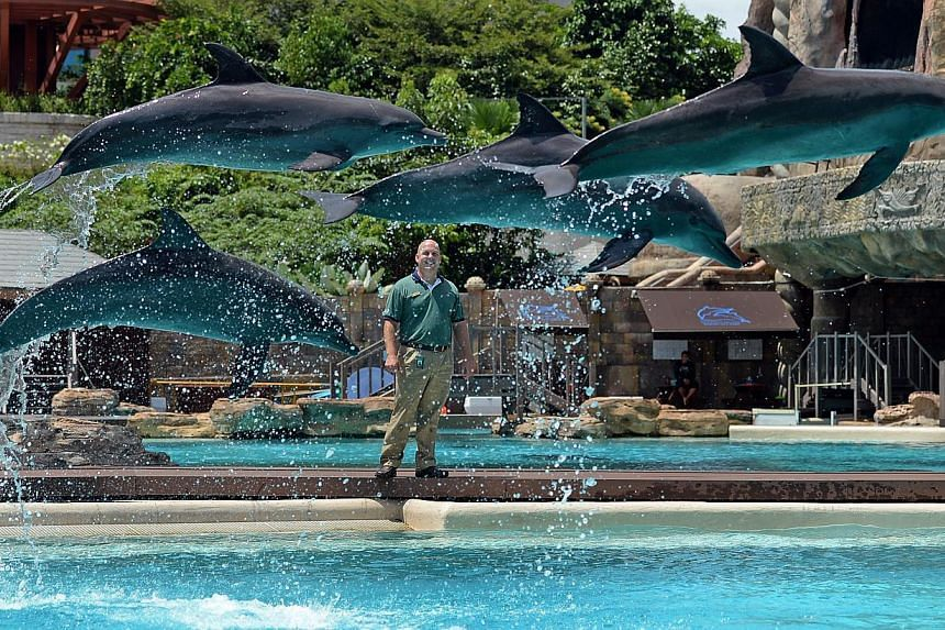 Andrew Schleis, assistant director of marine mammal operations at Marine Life Park, Resorts World Sentosa, looks as the dolphins sail through the air. -- ST FILE PHOTO:JOYCE FANG